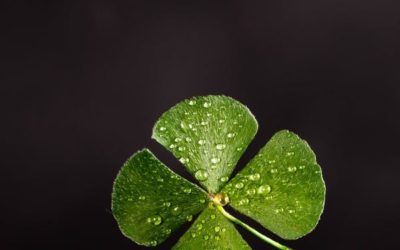 10 St Patrick's Day Songs to Add to Your Playlist